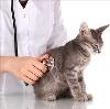 Ветеринарные клиники в Лопатинском